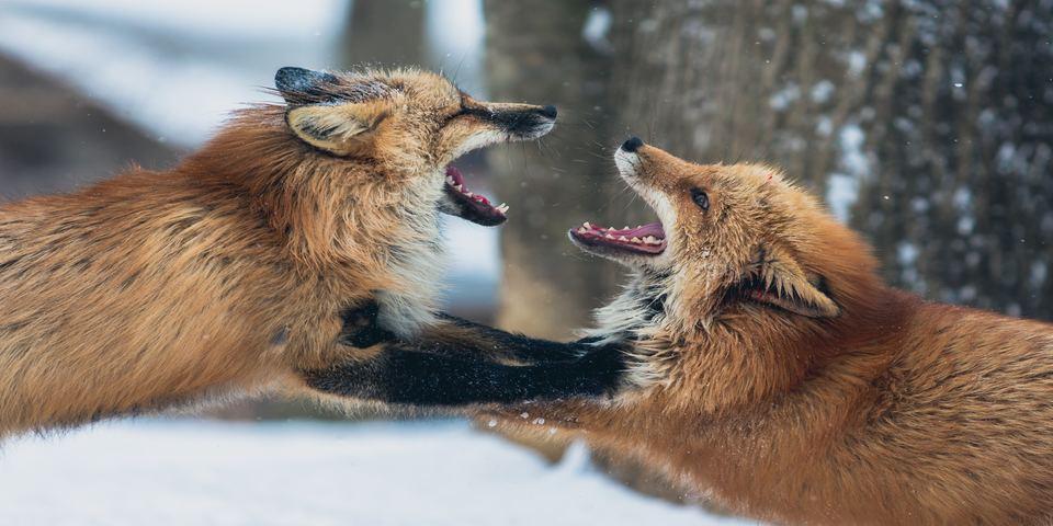 Promoter infighting spells trouble
